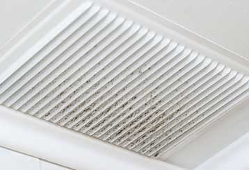 The Problem with Molds | Air Duct Cleaning Canyon Country, CA